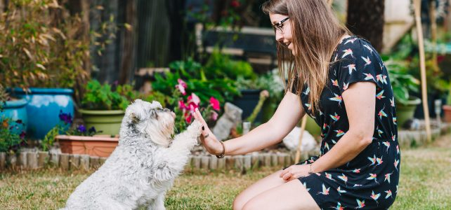 How to leverage Facebook groups to promote your pet business